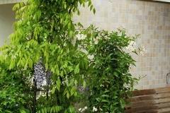 Rankgitter-für-Pflanzen