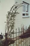 Dreiteiliges Klettergerüst für Pflanzen -freistehend-