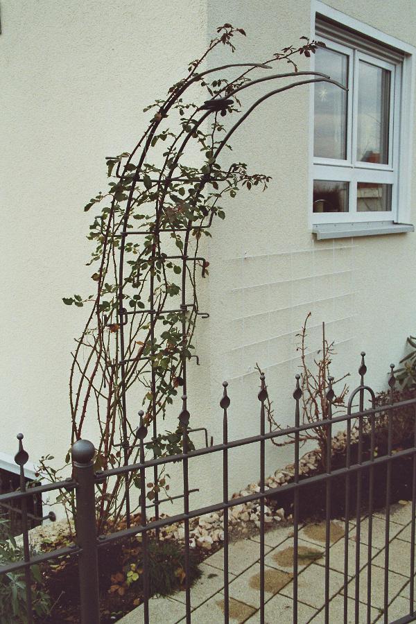 Pflanzen in PixMINE: klettergerüst für pflanzen