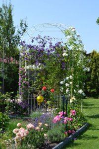 Pavillon mit Rosen und Clematis