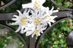 Edelweiss-als-Kreuzmitte-